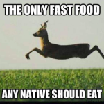 deer as fast food